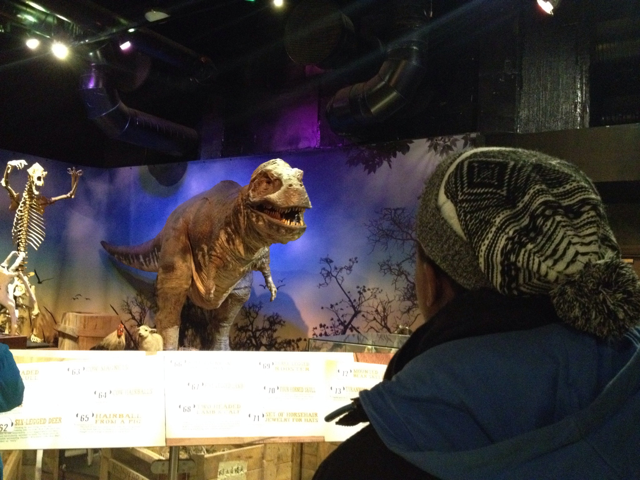 Ripleys Believe It or Not - Dinosaur