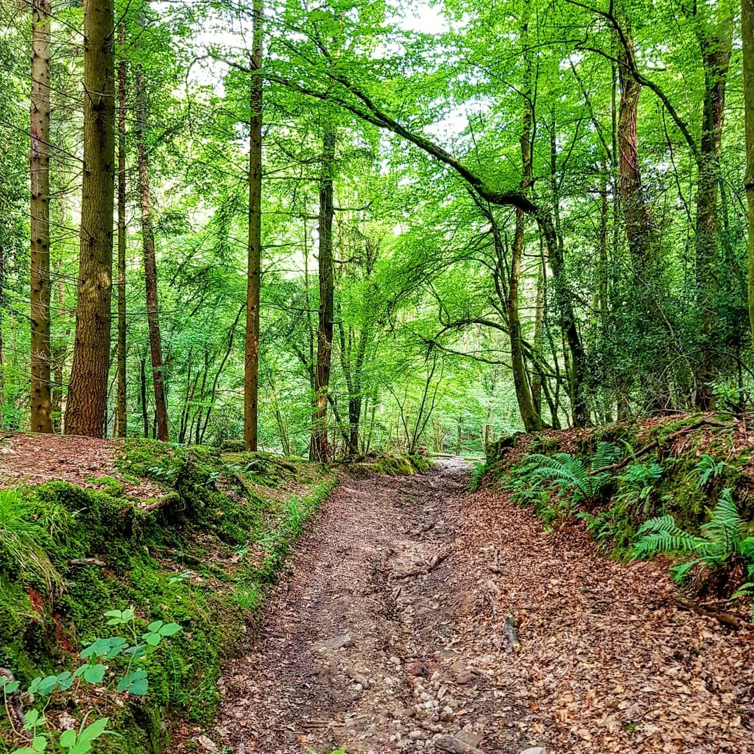 Forest Holidays, Forest of Dean