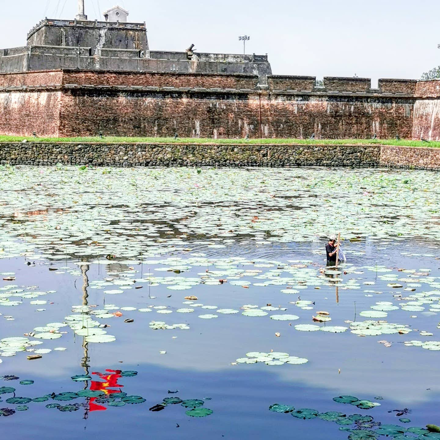 Imperial City Hue, man in moat tending to lillies